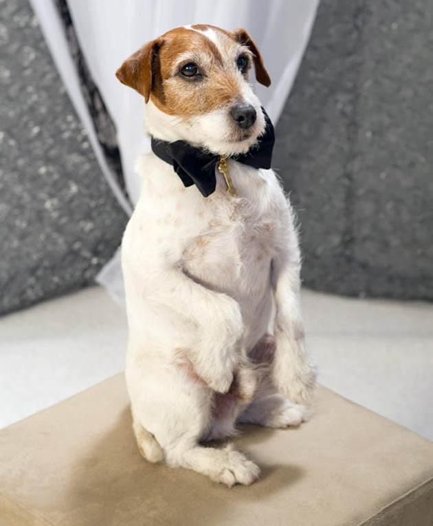 The Artist dog uggie Oscars' cutest star