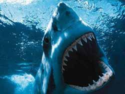 Jaws - shark Steven Spielberg